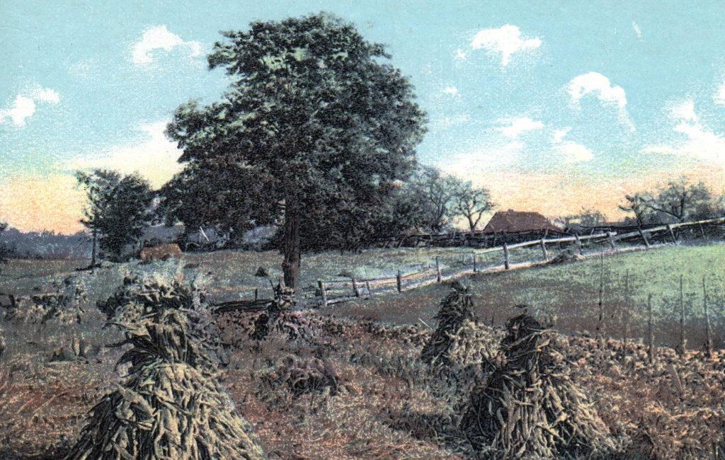 Harvest Time, Auburn, ME